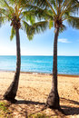 Two palm trees on tropical beach in vanuatu Stock Photos