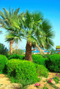 Two palms and bushes under blue sky Royalty Free Stock Images