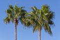 Two palmtrees over blue sky Royalty Free Stock Photo