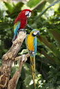Two parrot in green rainforest. Royalty Free Stock Photography