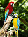 Two parrot in green rainforest. Royalty Free Stock Photos