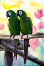 Two parrots green in zoo asia Royalty Free Stock Images