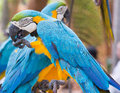 Two parrots in tropical park of nong nooch in pattaya thailand Royalty Free Stock Photography