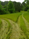 Two paths made from atvs traveling across the acreage the grass is very high and you can see where the merge Royalty Free Stock Image