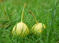 Two pears lie on the grass. Royalty Free Stock Photo