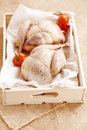 Two pheasants bird, plucked and stuffed in wooden box Stock Photography