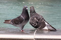 Two pigeons in fountain standing Royalty Free Stock Photos
