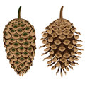 Two pine cones isolated closed open Royalty Free Stock Photo