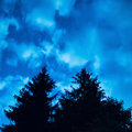 Two pine trees under blue night sky Royalty Free Stock Photo