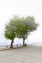 Two plane trees in the fog Royalty Free Stock Photos