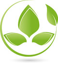 Two plants, leaves, wellness and naturopathic logo