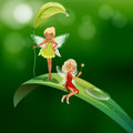 Two playful fairies lllustration of the Royalty Free Stock Photo