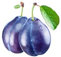 Two plums with a leaf Royalty Free Stock Images