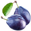 Two plums with a leaf Stock Photography