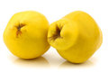 Two quince fruits Cydonia oblonga Stock Photo