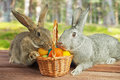 Two rabbits in a basket Stock Image