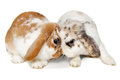 Two Rabbits Isolated On A Whit...