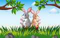 Two rabbits on the stump