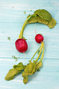 Two radishes on blue board Stock Photography