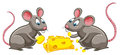 Two rats eating cheese Royalty Free Stock Photo