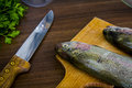 Two raw trouts Royalty Free Stock Photography