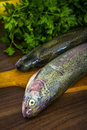 Two raw trouts Stock Images
