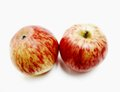 Two red apples portrait of a rare variery of from macedonia called karapasha Royalty Free Stock Image