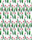 Two red beautiful bright tulips on a white background seamless pattern watercolor hand sketch Royalty Free Stock Photo