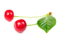 Two Red Cherries Isolated on White Background Royalty Free Stock Photos