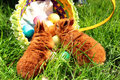 Two red easter bunnies in green grass and toppled basket with colorful eggs