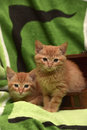 Two red kitten and box Royalty Free Stock Photo