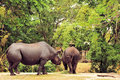 Two Rhinoceros Royalty Free Stock Photo