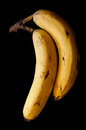 Two ripe bananas Royalty Free Stock Photo