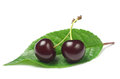 Two ripe cherry Royalty Free Stock Images
