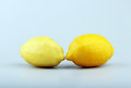 Two ripe yellow lemons in studio Royalty Free Stock Photo