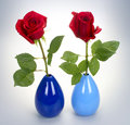 Two roses red on white background Royalty Free Stock Image
