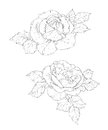 Two roses sketch black on white Stock Photography