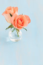 Two roses vase copy space Royalty Free Stock Photography