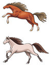 Two running horses Stock Images