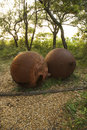 Two rusty metal spheres. Royalty Free Stock Photography