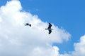 Two sea gulls in flight against of blue sky Royalty Free Stock Photo