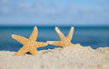 Two sea star starfish on beach Royalty Free Stock Photo