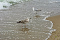 Two seagull. Royalty Free Stock Photo