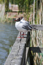 Two seagulls on a balustrade foto of Royalty Free Stock Photos