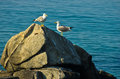 Two seagulls at morning chat on a rock by the sea chalkidiki greece Royalty Free Stock Photography