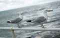 Two seagulls on promenade railing Stock Photo