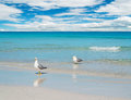 Two seagulls on a turquoise foreshore Stock Photo