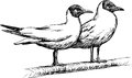 Two seagulls the vector image of Royalty Free Stock Photos