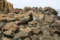 Two seals ready to fight, Otago, New Zealand Royalty Free Stock Photo