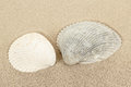 Two seashell in sand close up of Stock Photos